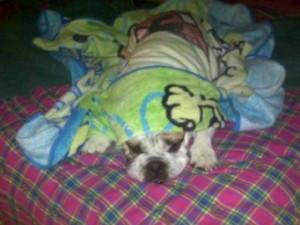 LuLu Sleeping
